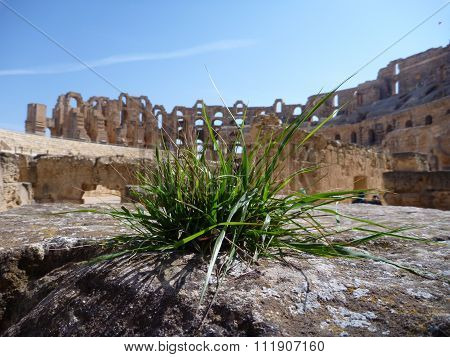 Grass Growing At The Stone In The Amphitheatre El Jem