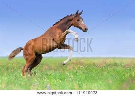 Colt play on pasture