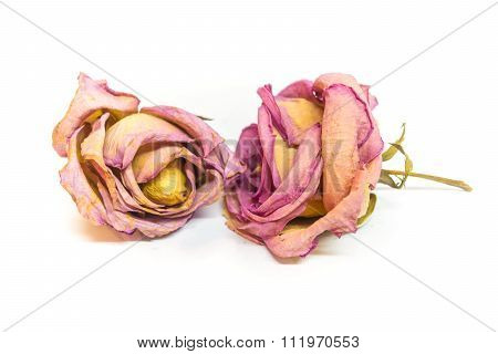 Colorful Preserved Twice Roses Isolated On White Background