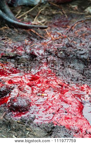 Cigarette laying in the red blood and mud during buffalo slaughter of a funeral