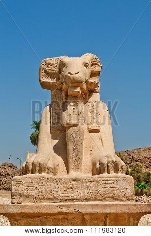 sphinx with ram's head