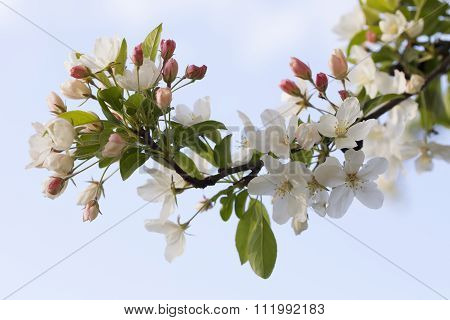 flowering trees in spring