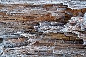 Rime on rotten wood covered with frost poster