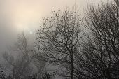 misty landscape with trees, sky and sun, foggy photo with gloomy feeling poster