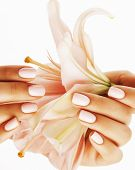 beauty delicate hands with manicure holding flower lily close up isolated on white, woman perfect shape poster