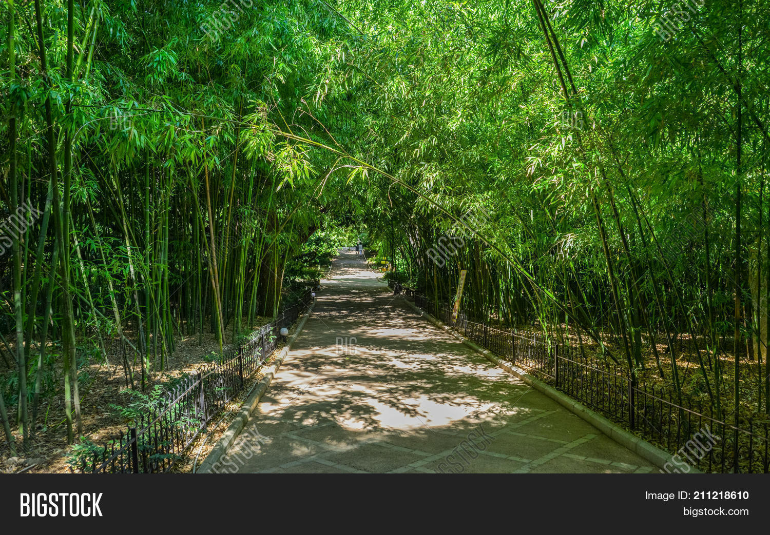 Green Park Road Path Image Photo Free Trial Bigstock
