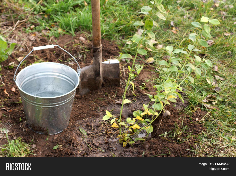 Contemporary Bush Garden Picture Collection - Beautiful Garden ...
