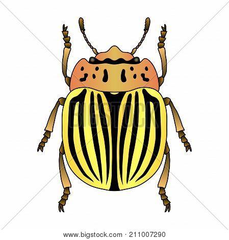colorado potato beetle. Leptinotarsa decemlineata. Sketch of colorado potato beetle. colorado beetle isolated. colorado beetle Design for coloring book. hand-drawn colorado beetle. Vector