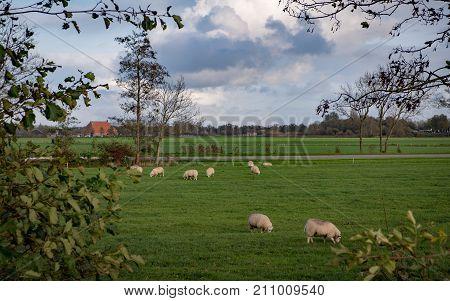 Dutch Landscape In The Summertime
