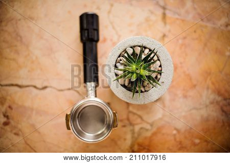 Top view of baristas temper and green plant in concrete pot on the bright background