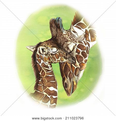watercolor picture animal mammals living in Africa giraffes, mother and child, female giraffe and cub