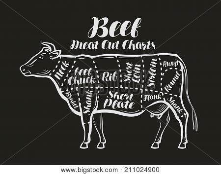 Meat cut charts. Cow, beef concept. Menu restaurant or butcher shop