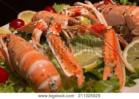Uncooked Orange Lobsters, Aquatic Crustaceans inside White Tray.