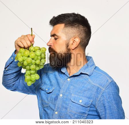 Winegrower With Dreamy Face Smells Cluster Of Grapes.