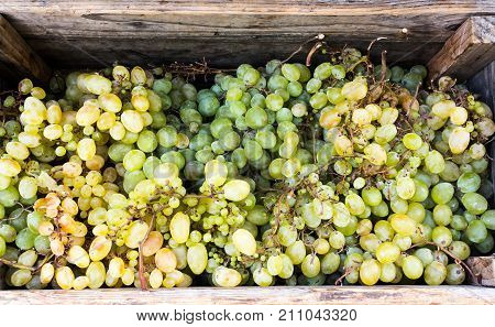 Wine Grapes In Wooden Box