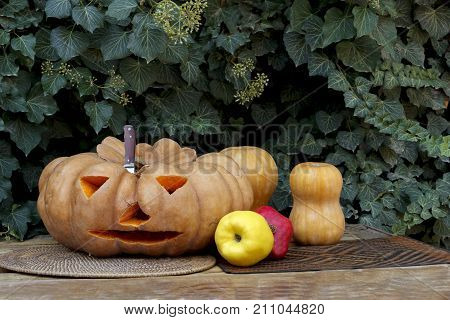The knife sticks out in a pumpkin on a background of ivy. Ave a pomegranate. Halloween.