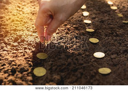 Seedling and saving concept by human hand Human seeding coins in soil for growing money.