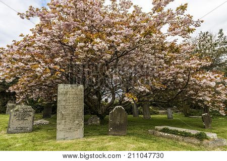 St. Just England - April 27 2017: Cemetery with gravestones at the church of Saint Just in Cornwall.