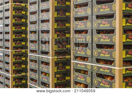 Harmelen Netherlands - May 23 2017: Tomatoes stockroom with pallets.