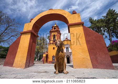 February 26 2016 Bernal Queretaro Mexico: obedient tourist dog sitting under colonial arch in front of church