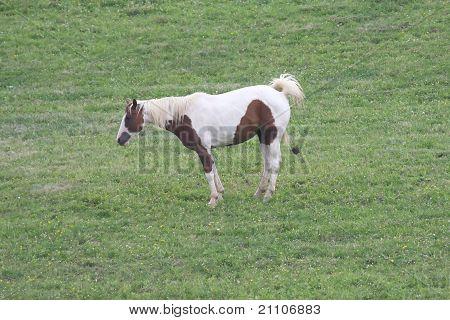 Horse Poop