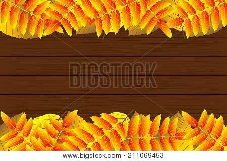 Autumn - beech and rowan leaves - vector background , Autumnal leaf of beech and rowan , (Fagus sylvatica Sorbus aucuparia)
