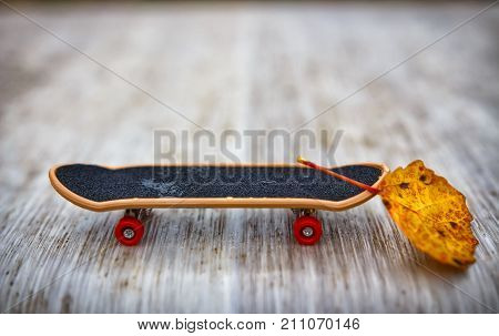 little skate with yellow leaf ballast. Reset ballast the concept of optimization and promotion.