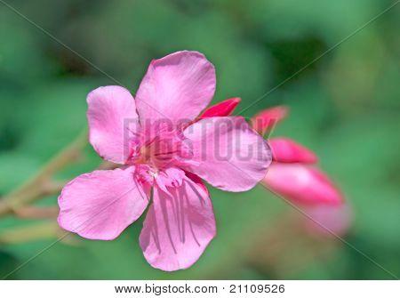 Bright Pink Flower Against Green Vegetation
