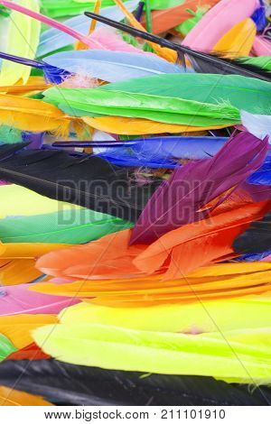 Feathers texture. Beautiful colored vibrant bird feather photo as background. Colorful feather pattern. Birds.