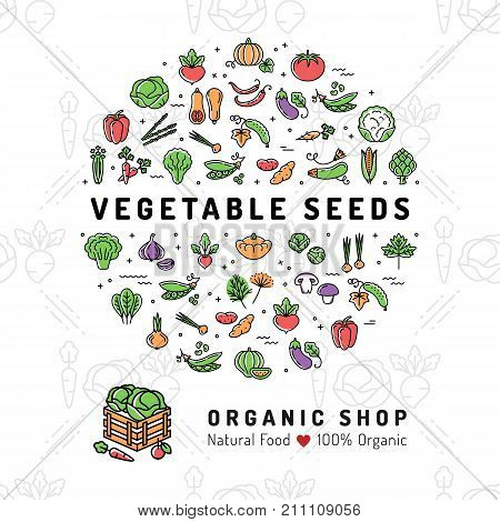 Vegetable seeds banner Organic shop Natural product card Seed growing flyer. Fresh vegetarian food, Veggie thin line icons, Vegetables background. Vector flat illustration