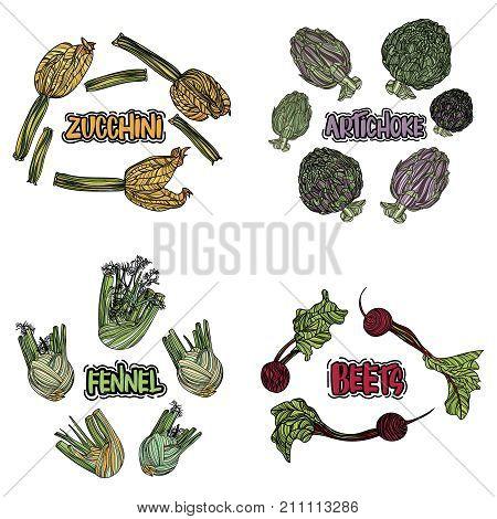 Color vegetables set. Isolated zucchini, artichoke, fennel, beet. Hand drawing vegan food. Vector illustration art.