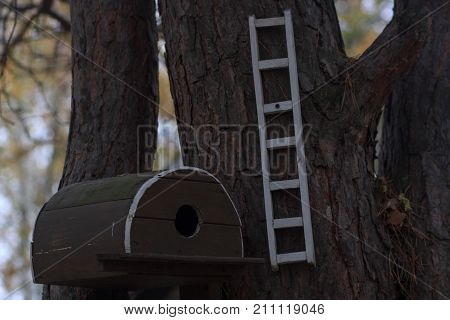 birdhouse on a tree in forest Park , hand wood shelter for birds to spend the winter.