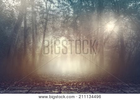 Calmness misty spooky woods in autumn with warm lighting background serenity forest