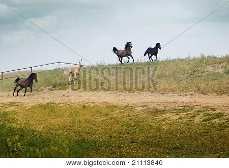 vier laufende Pferde