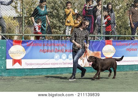 A young girl - Handler with chocolate Labrador in the ring. Tashkent Uzbekistan. International Dog Show Oltin It October 15 2017
