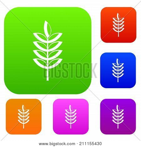 Rye spica set icon color in flat style isolated on white. Collection sings vector illustration