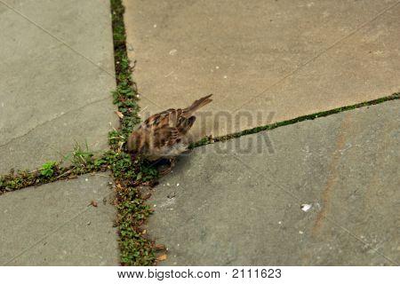 Sparrow Marks The Spot