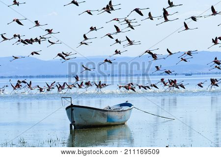 Flamingo family and an old boat in Manisa, Turkey