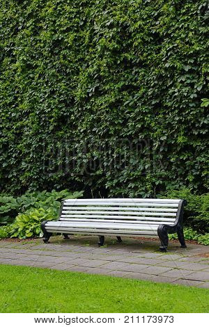 bench to relax in the Park, green wall