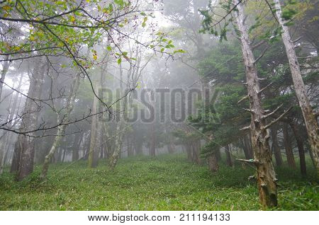 Misty world after rain, it is mysterious but beautiful world.