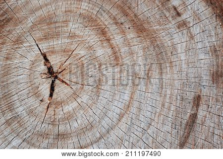 Stump with cracked wood. Twood stump texture