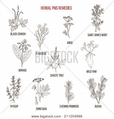 Herbal Remedies for PMS. Hand drawn vector set of medicinal plants