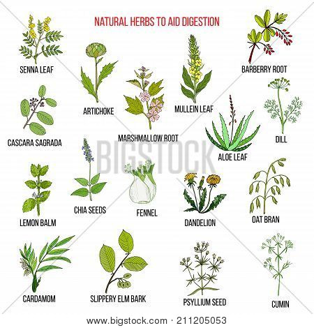 Herbal remedies for aid digestion. Hand drawn vector set of medicinal plants