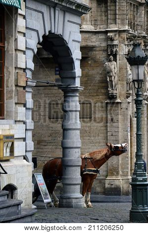 Brussels, Belgium - April 2015: A Horse At Grand Place, Most Memorable Landmark Of Belgium Located A