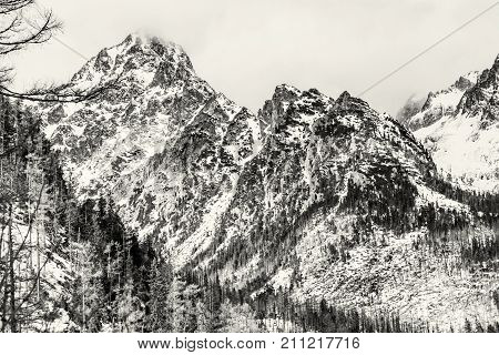 Spruce forest after natural disaster and snowy peaks in High Tatras mountains Slovakia. Winter natural scene. Black and white photo.