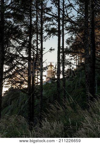 Heceta Head Lighthouse Through Trees along coast