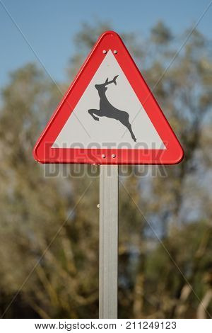Road sign Caution Wild crosses the road