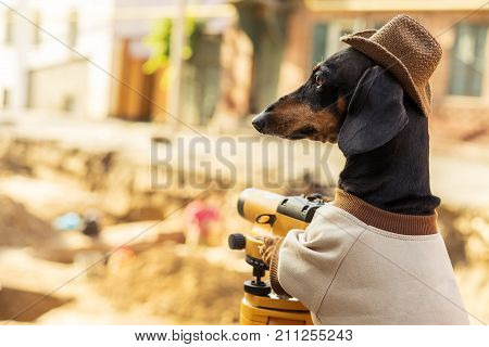 dog dachshund black and tan in the clothes of an archaeologist and hat on archaeological excavations against looks at the level