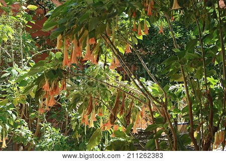 Bush blooming with orange flowers at late summer