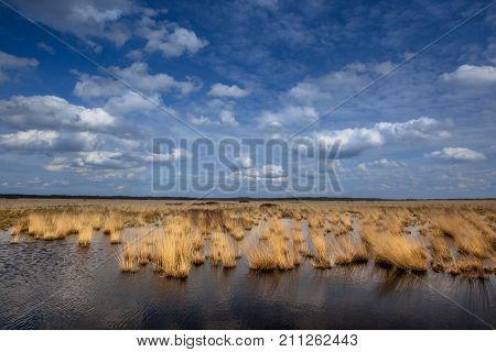 Raised Bogs Swamp